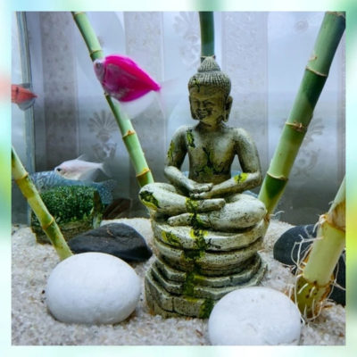 blog décoration aquarium asiatique