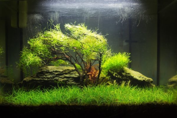 blog graine herbe aquarium