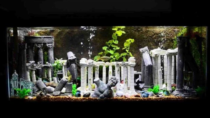 blog temple aquarium