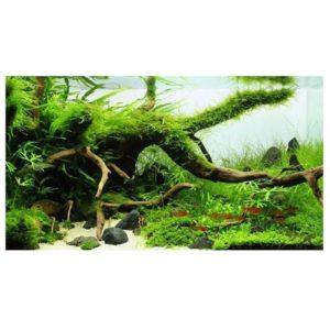 Bois naturel décoratif pas cher