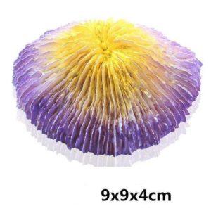 Coraux champignons aquarium pas cher
