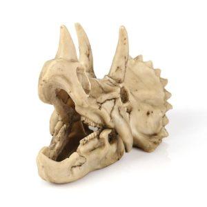 Crâne de tricératops aquarium
