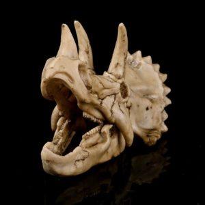 Crâne de tricératops pour aquarium