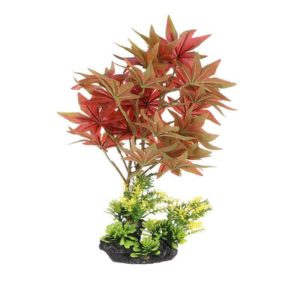 Plante Feuilles Oranges decoration aquarium