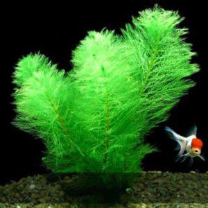 Plante artificielle verte en velours pas cher