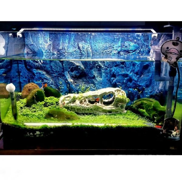 Roche bleue roi aquarium fond en relief