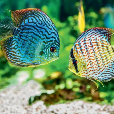 blog introduire des poissons en aquarium