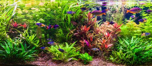 blog améliorer l'aspect de son aquarium