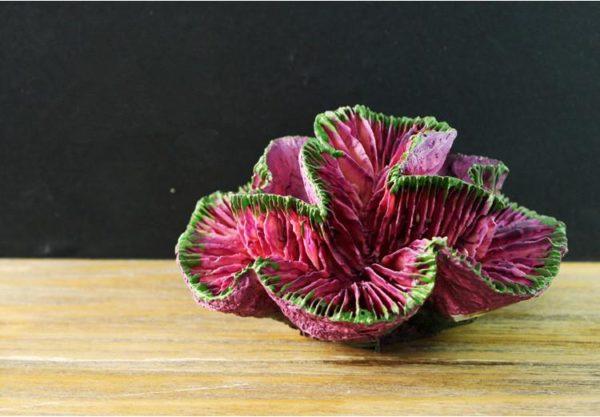 Coraux violets aquarium pas cher