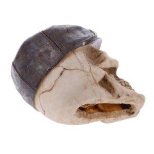 crâne avec béret pour aquarium