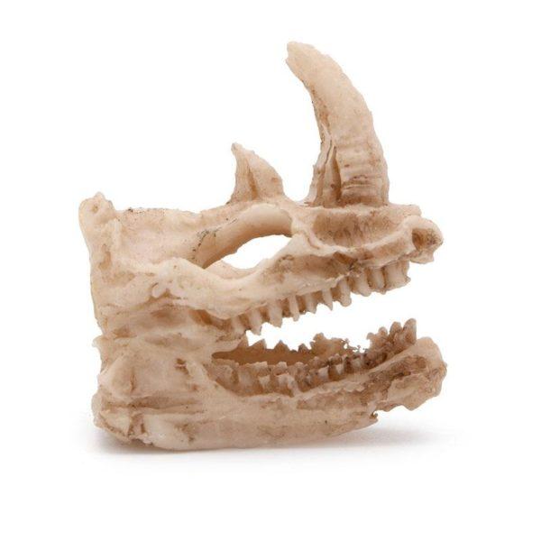 crâne de rhinocéros aquarium