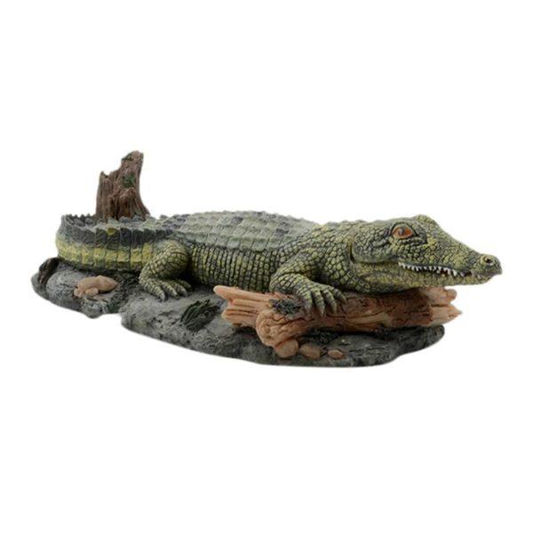 Crocodile Amérique du Sud aquarium