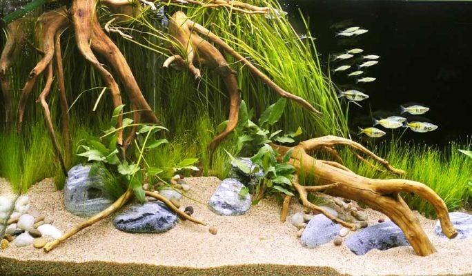 décoration naturelle aquarium