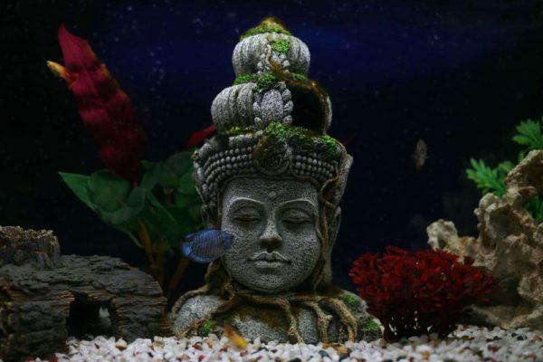 décorations aquarium