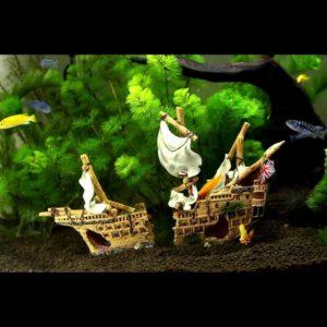 épave de bateau anglais dans aquarium