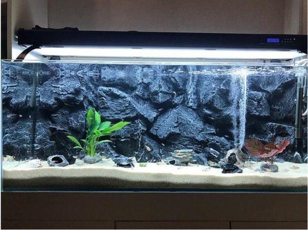 fond aquarium rocher escarpé réaliste pour poissons