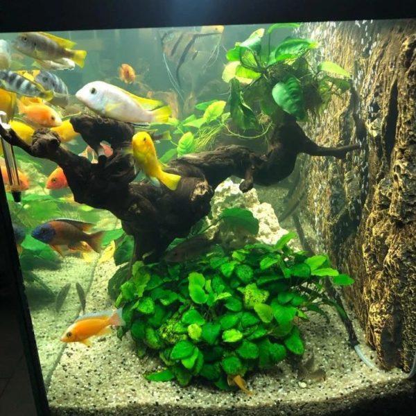 Fond aquarium zen cuir