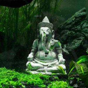 ganesh aquarium