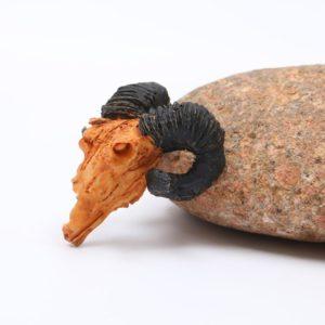 petit crâne de chèvre aquarium pas cher