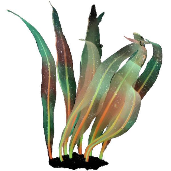 Algue Bicolore decoration aquarium
