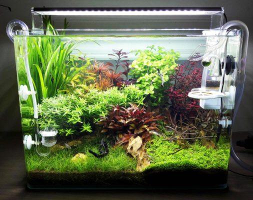 blog petit aquarium