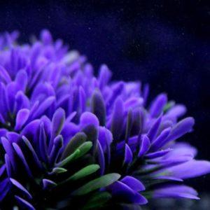 Buisson Plante Aquatique decors aquarium