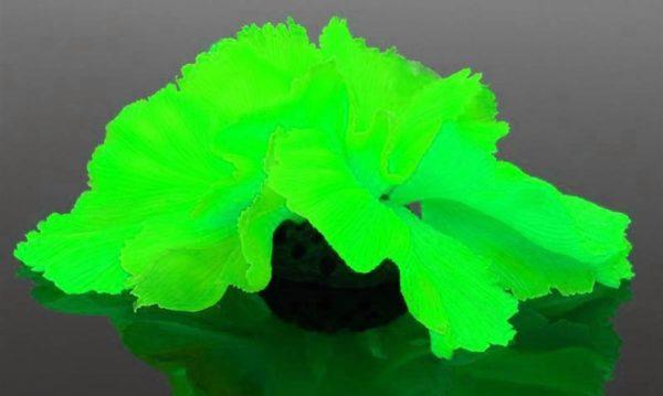 Plante Fluorescente decors aquarium