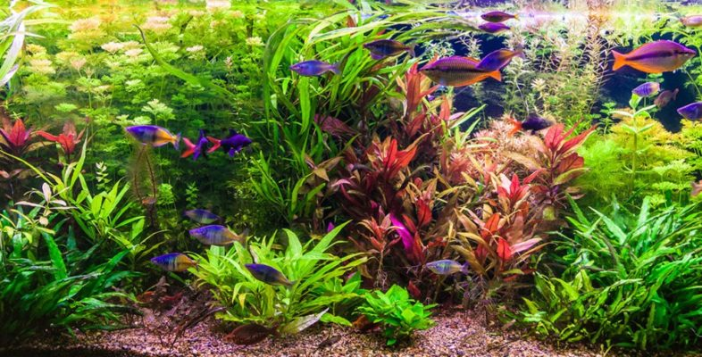 blog-combien-de-poissons-aquarium