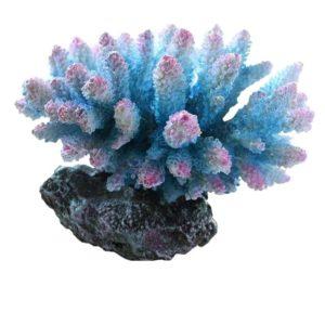 grand coraux colores deco aquarium