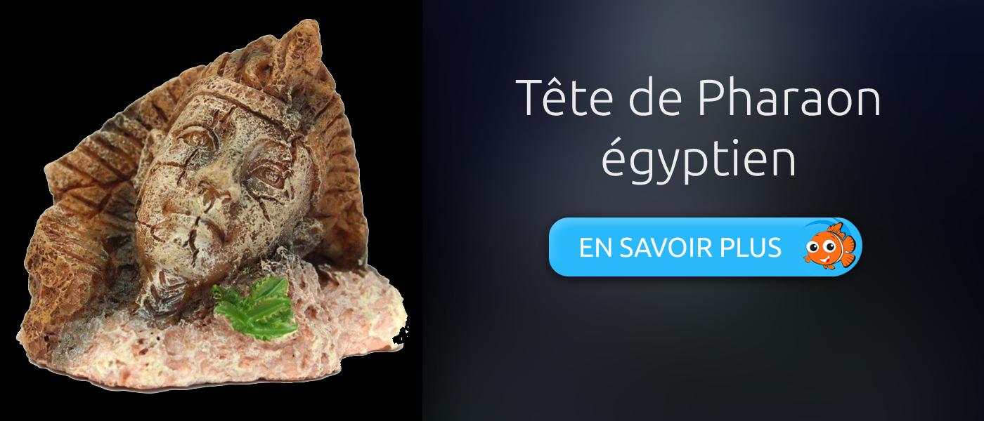 décoration aquarium tête de pharaon égyptien