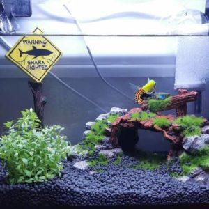 Panneau Danger pour Aquarium decorations aquarium