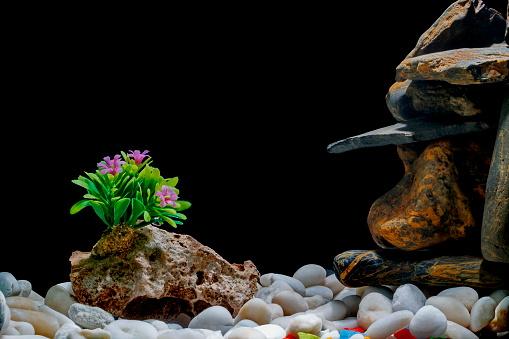 nettoyer décoration aquarium