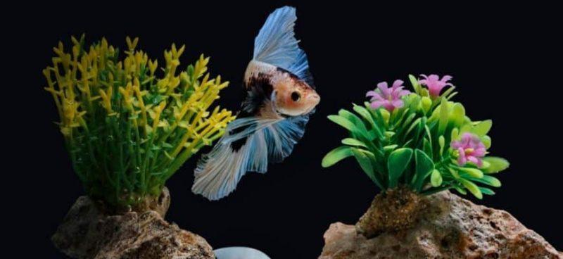 nettoyer les décorations d'aquarium