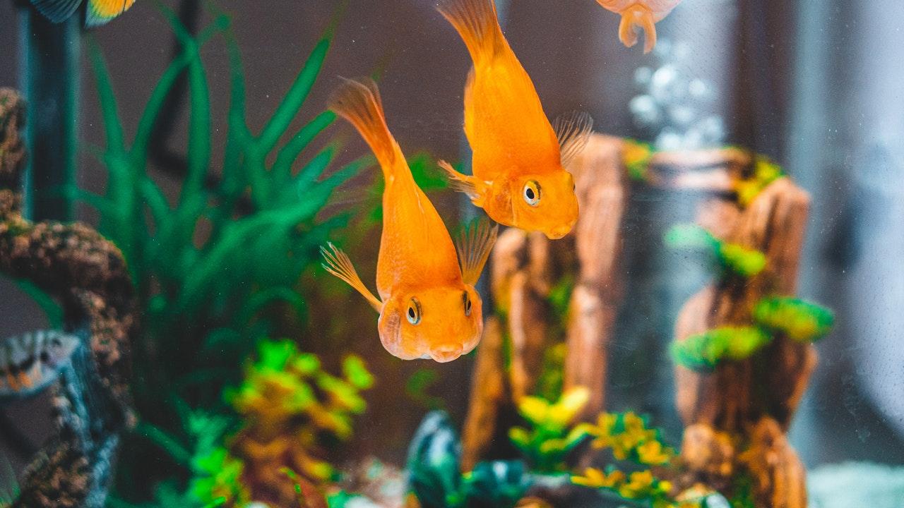 nettoyage décor aquarium